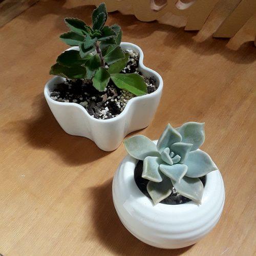 komorebi - macetas y contenedores para plantas